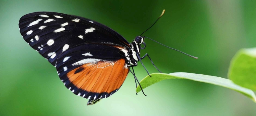 close up of butterfly on plant